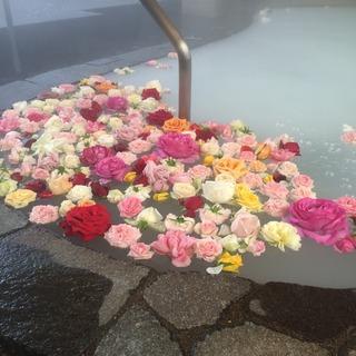 バラ風呂写真2.jpg